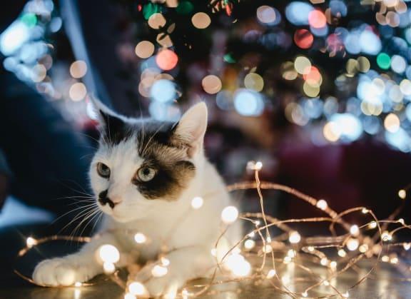 Cat-friendly at Knollwood Meadows Apartments, Santa Maria