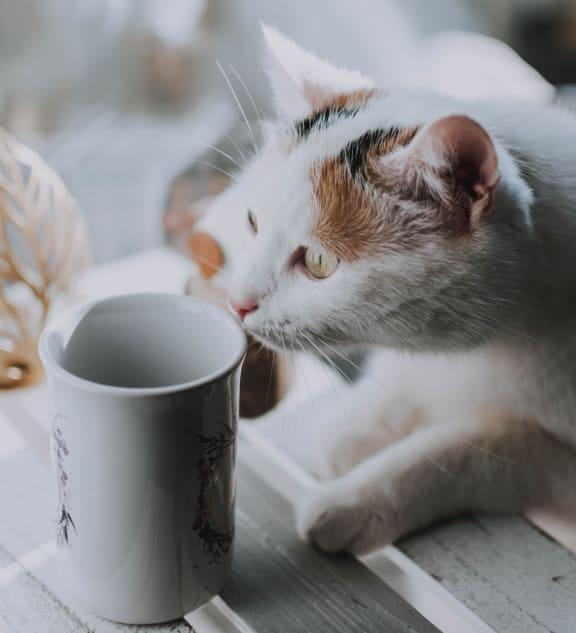 cat_coffee_cup at Sumida Gardens Apartments, Santa Barbara, CA, 93111