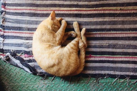 sleeping_cat at Sumida Gardens Apartments, Santa Barbara, California