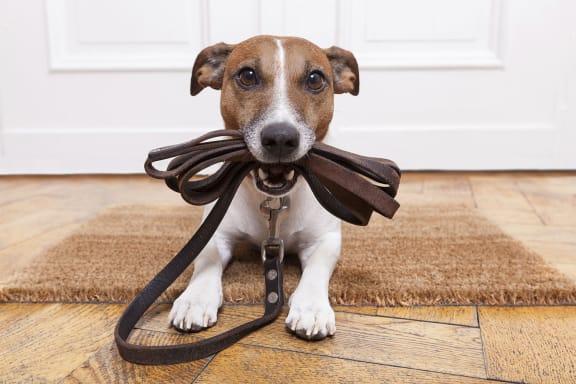 Pet Friendly Apartment Living at Azure Houston Apartments, Texas, 77007
