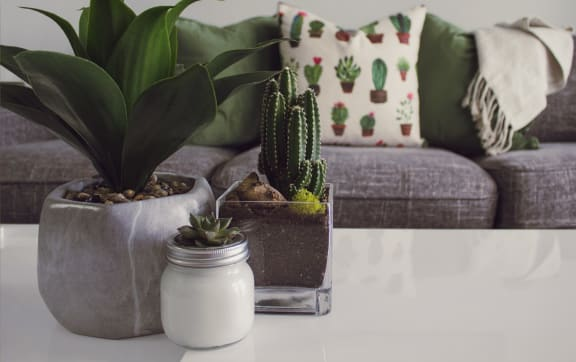 Gray couch with pillows and plants on table
