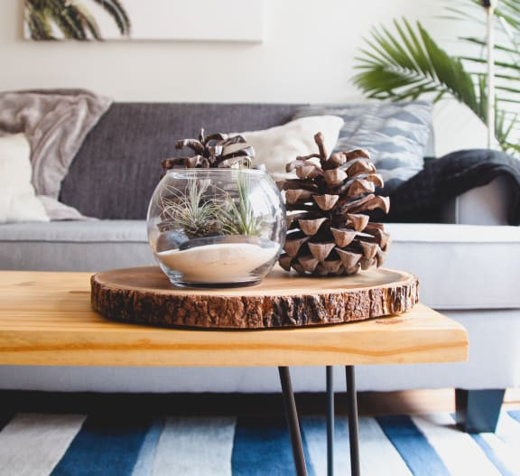 Close up of coffee table with pine cone in front of couch