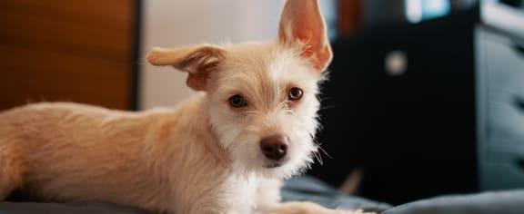 Dog stock image at Mission Vista Apartments in Tucson AZ