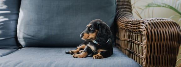 Dog stock photo at Bear Canyon Apartments in Tucson AZ