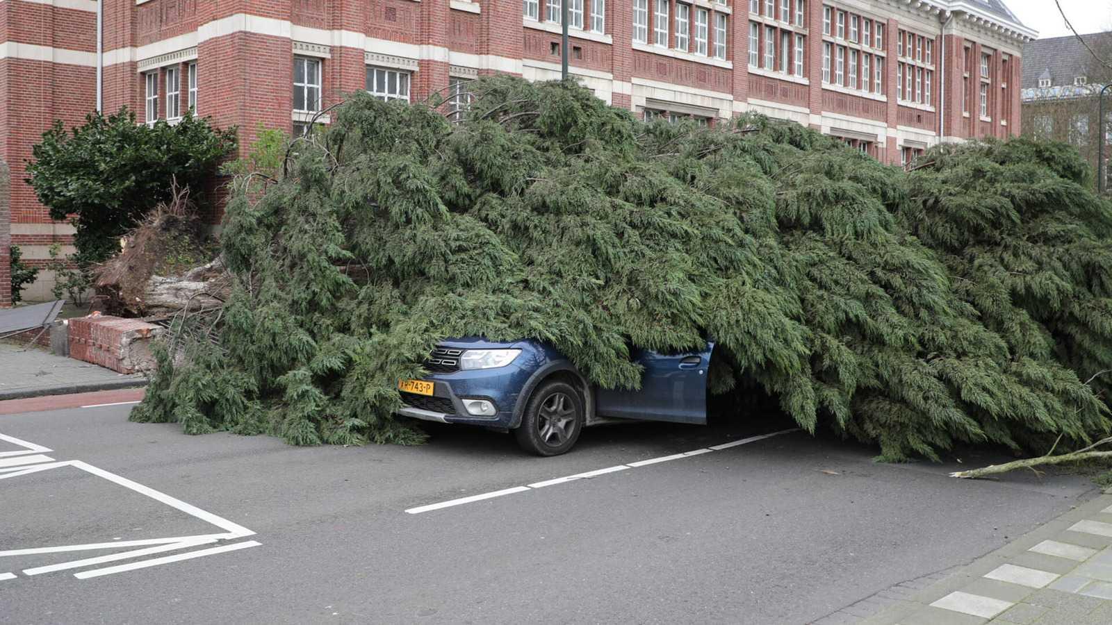 Упавшее на машину дерево. Фото: Regio15.