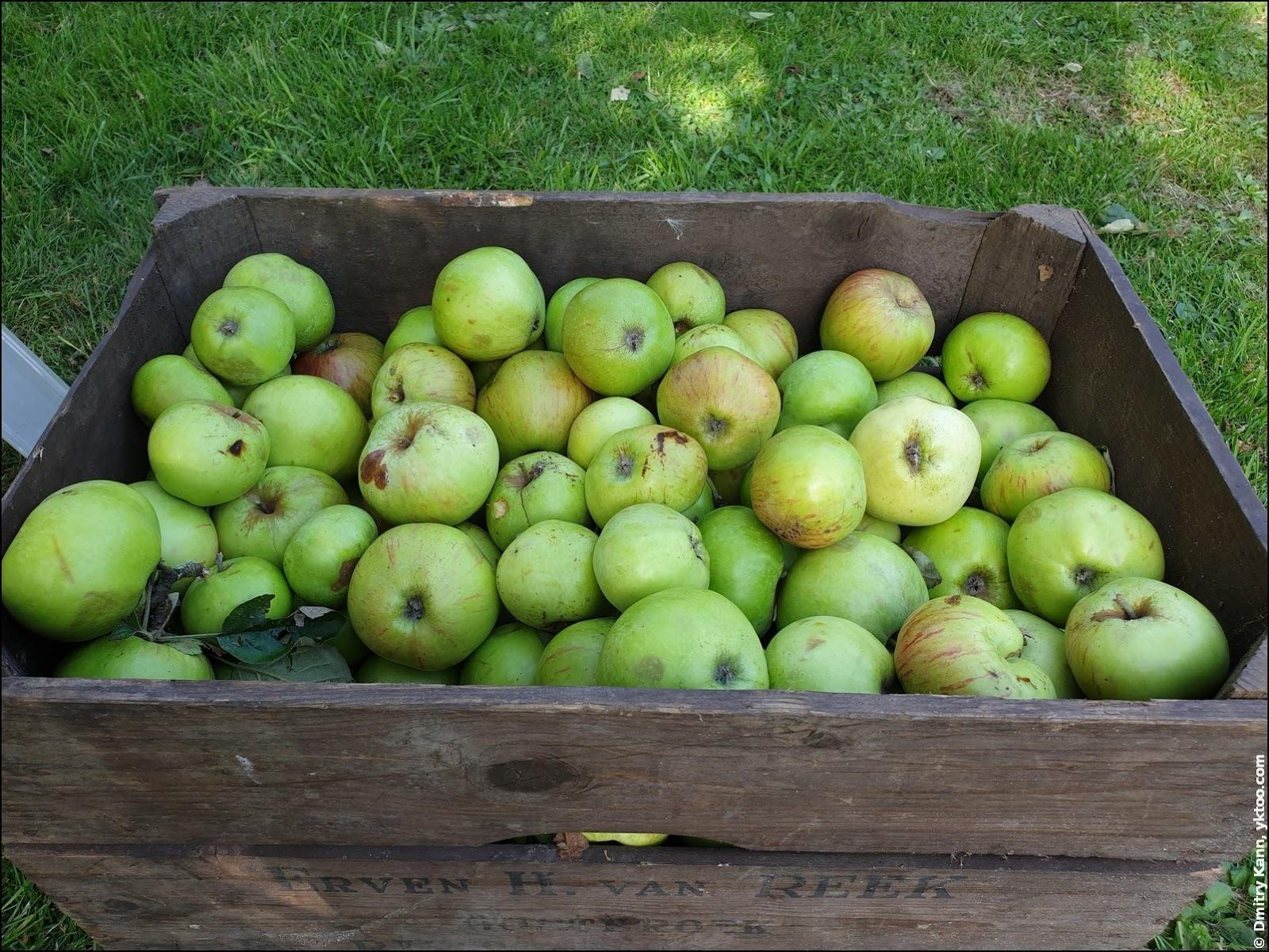 Яблоки «на пирог».