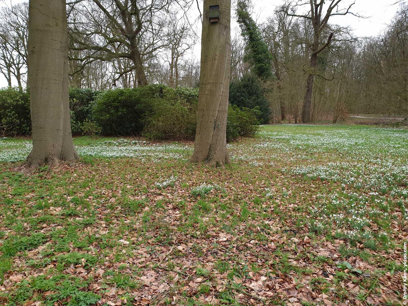 Подснежниковые поля в парке Amelisweerd.