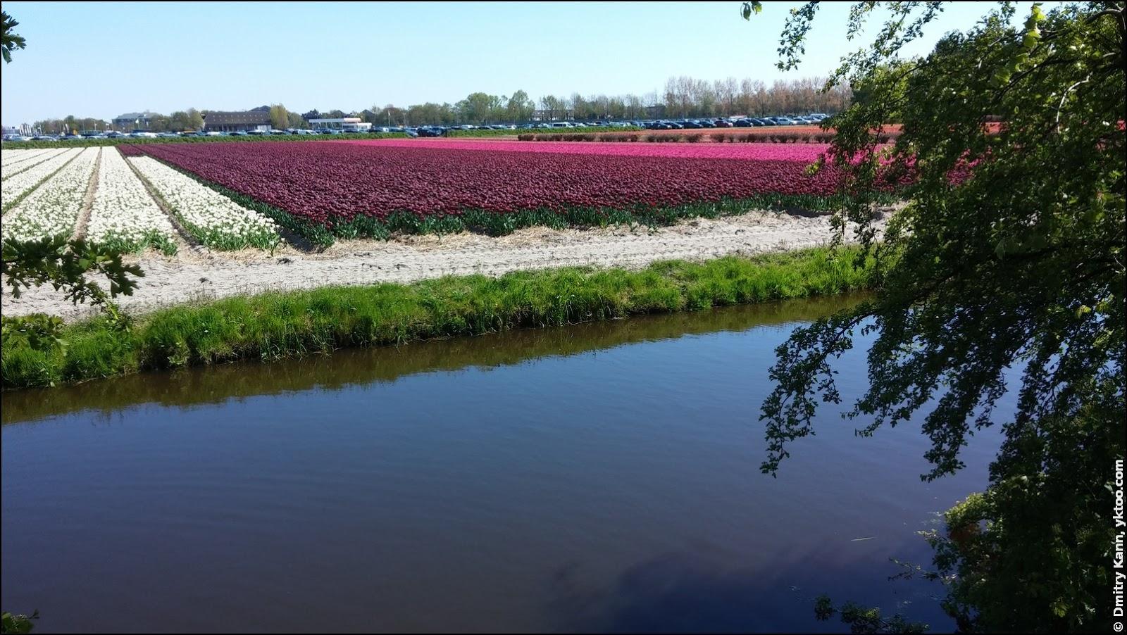 Лиссе, цветочные поля.