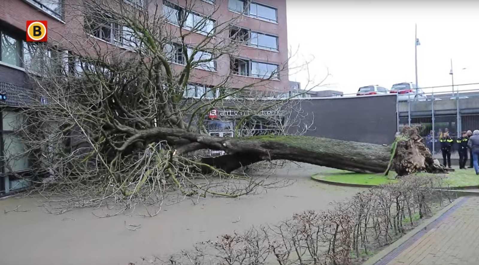 Кадр из видео Omroep Brabant.
