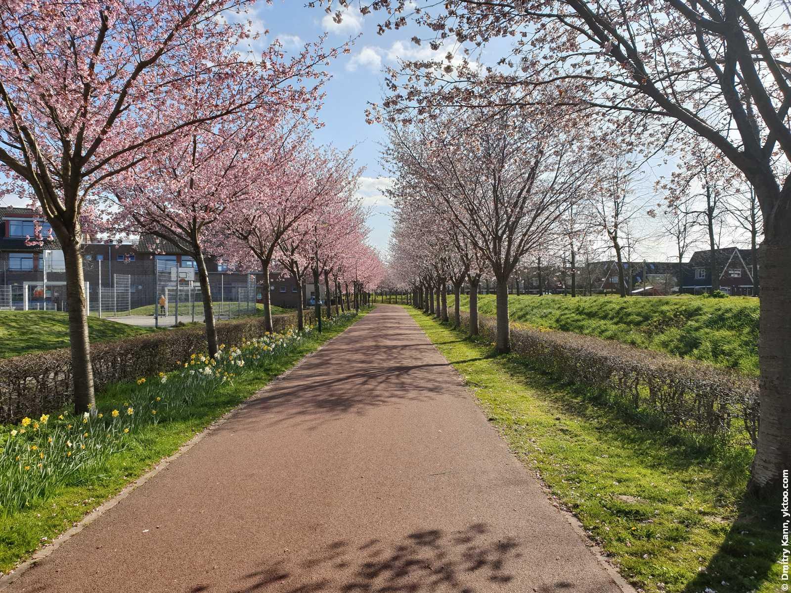 Spring in Houten.