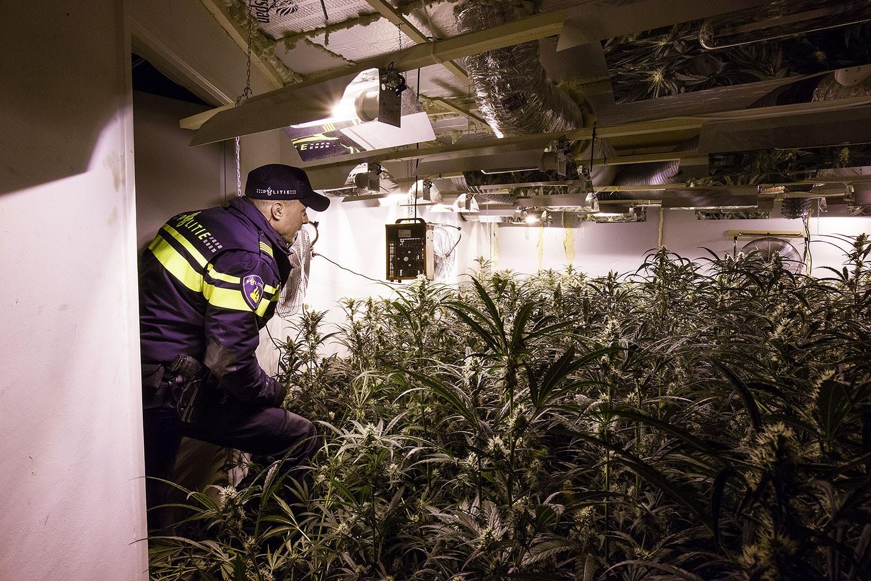 Одна из нелегальных конопляных плантаций в жилом доме в Гелдермалсене. Фото полиции Нидерландов.