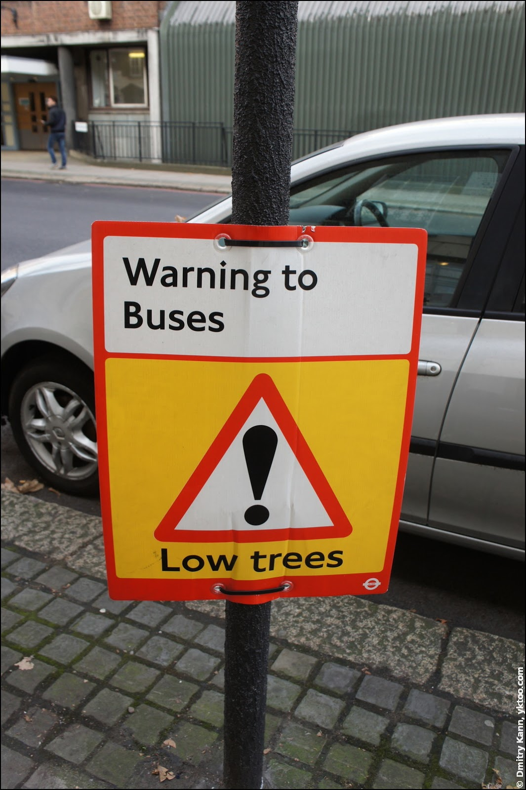 «Низкие деревья».
