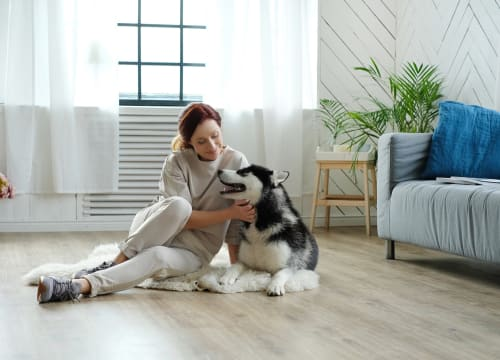 How to make your rental property pet friendly.jpg