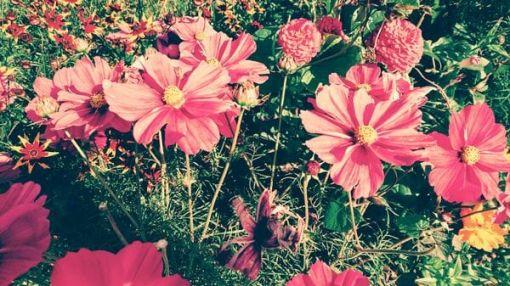 Metta – Loving Kindness – Wetzikon – mit Iris Stadelmann – 4. März 2018