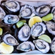 Oysters (18 pcs) (DF)
