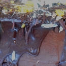 Chocolate mud cake  (18 cm)