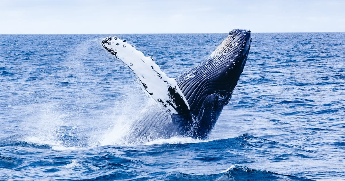 海でクジラが泳ぐイメージ画像