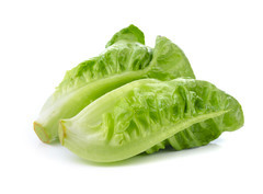 Image result for baby cos lettuce