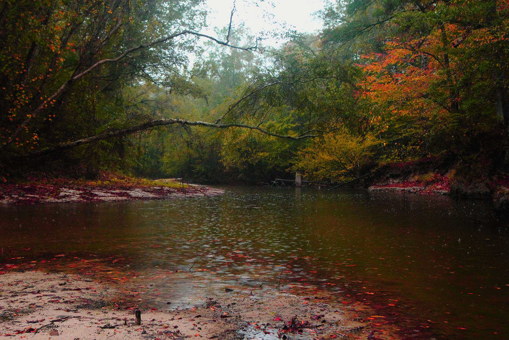 Longleaf Trail Scenic Byway Louisiana