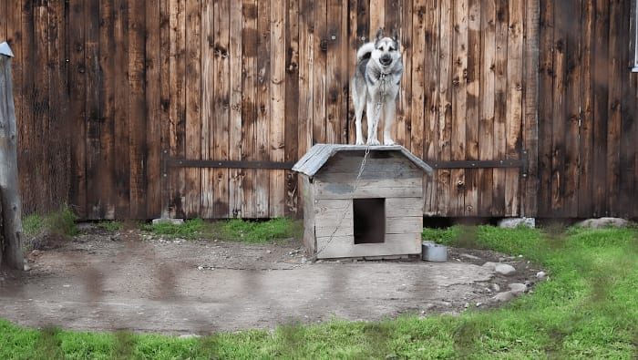 Tethered Dog In A Cage