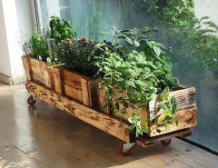 מארז צמחים לשתילה