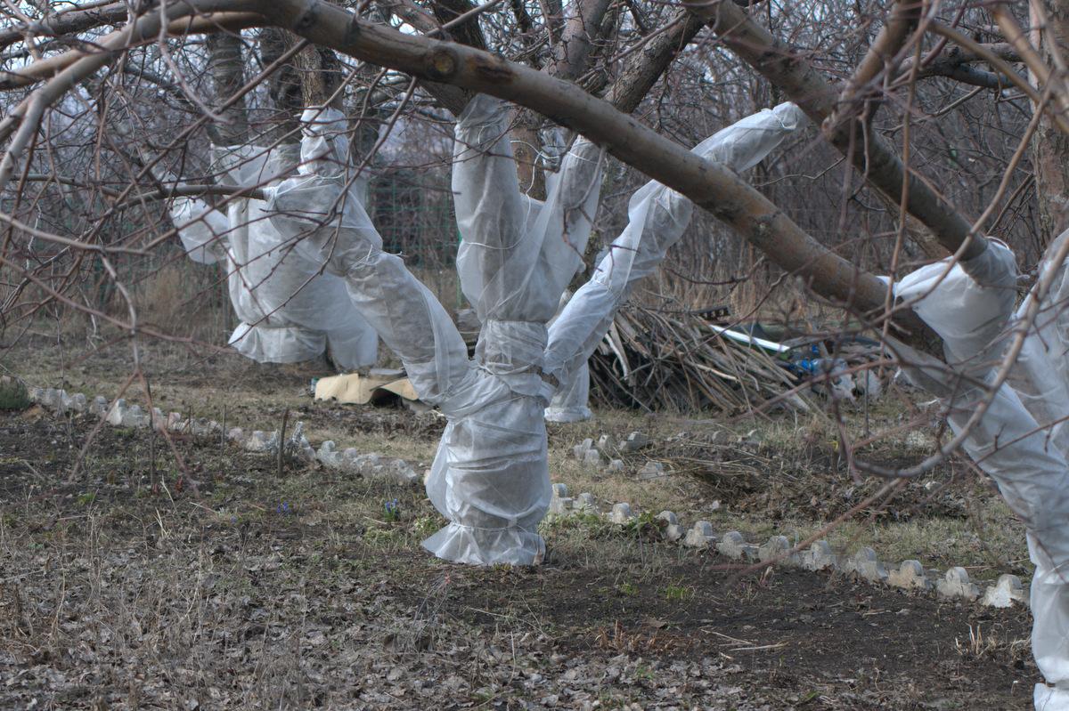 укрываем деревья материалом
