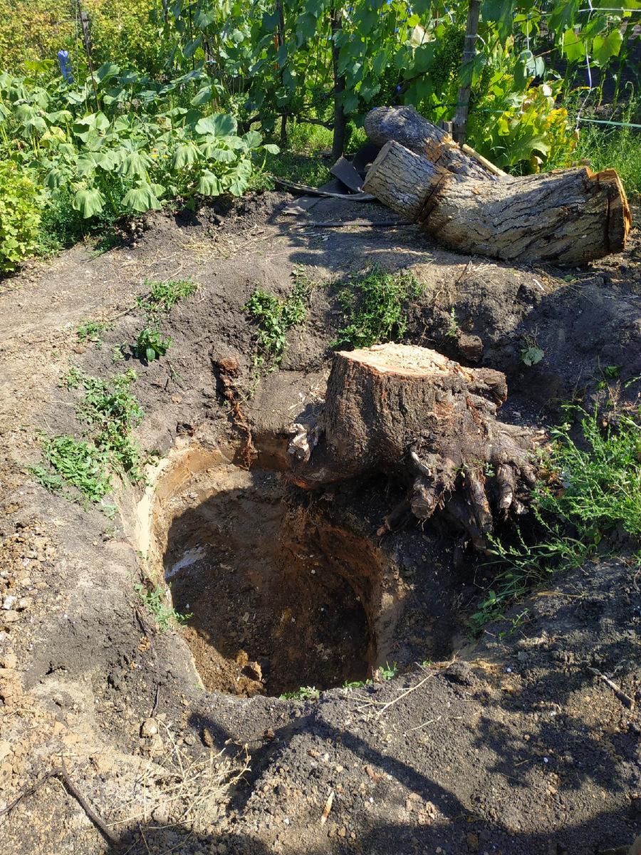 пень от старого дерева в яме
