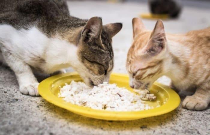 Info Terkini, Jangan Pernah Diusir, Ini 3 Pesan Allah Melalui Kucing yang Mendekat Saat Kamu Makan!