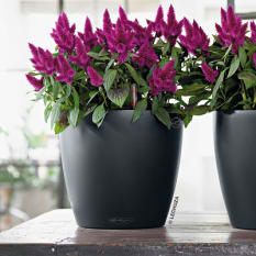 Lechuza Classico Color 28 Self-Watering Planter
