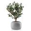 Eva Solo Stone Flower Pot - 19cm with plant