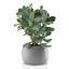 Eva Solo Stone Flower Pot - 16cm with plant