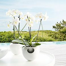 Flower & Herb Pots