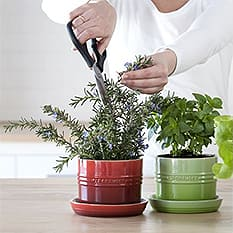 Indoor Herb Planters & Keepers