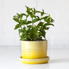 Le Creuset Herb Planter, 14cm
