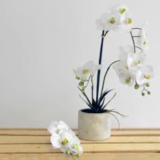Sarah Jane White Decorative Multiple Orchids with Ceramic Pot