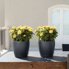 Lechuza Classico Color 35 Self-Watering Planter