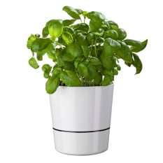 Mepal Self-Watering Herb Pot, 13cm
