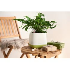 Lechuza Yula Self-Watering Planter