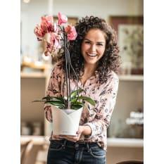 Orchidea Plant Pot