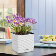 Lechuza Cube Color 14 Self-Watering Planter