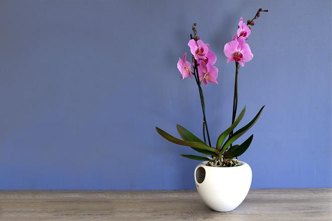 Eva-solo-orchid-pot