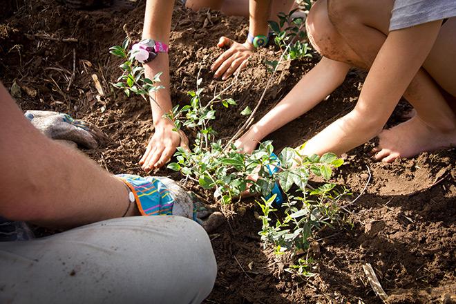 Greenpop-reforest