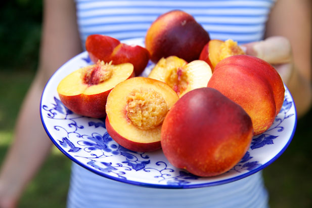 Nectarines in season