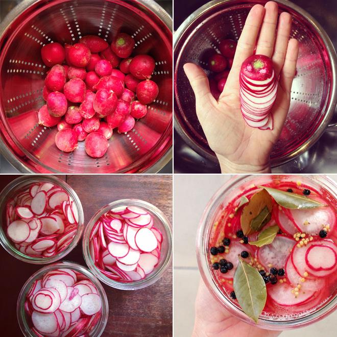 pickeld-radishes-grid