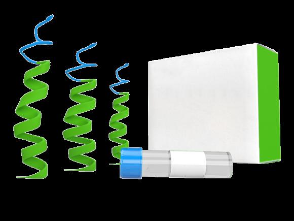 LSBio Aequorea victoria GFP Protein (Recombinant) package