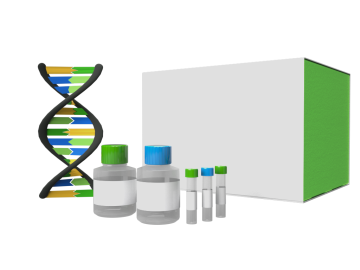 DNA 12K Reagent Kit