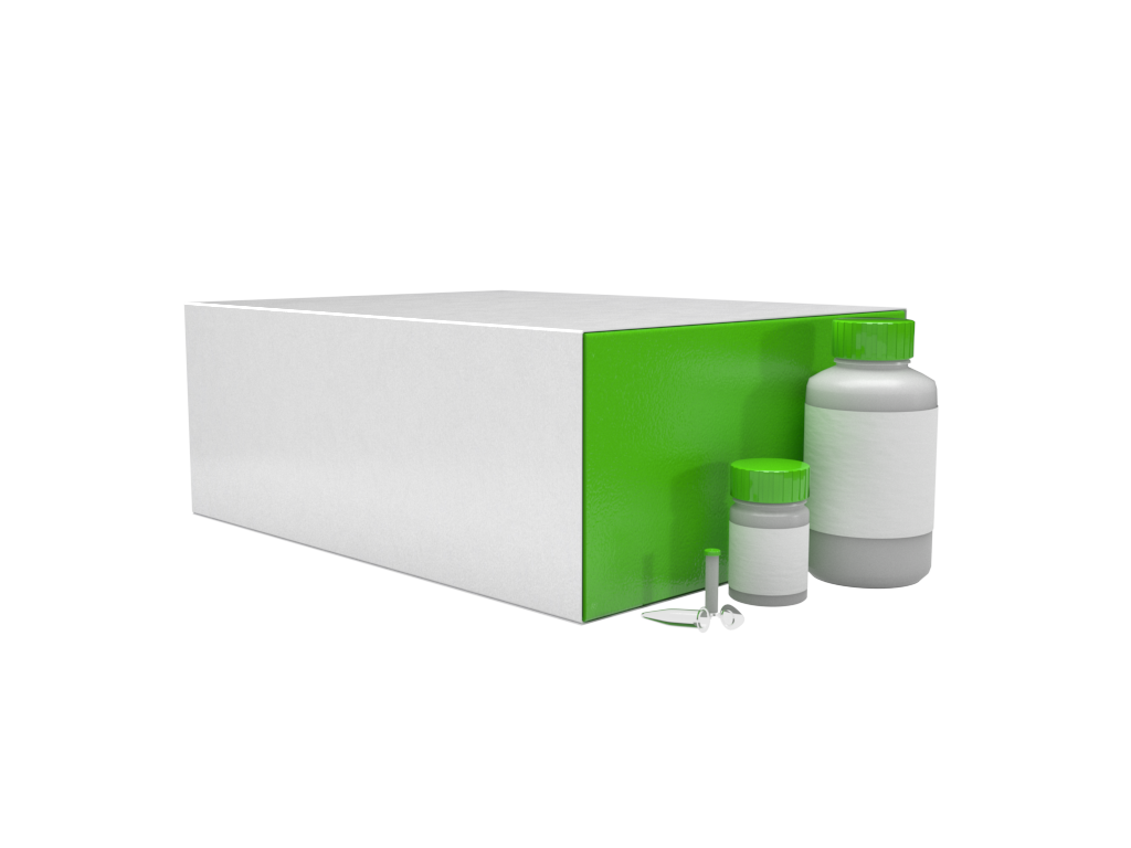 GenCatch™ Plasmid Plus DNA Maxiprep Kit