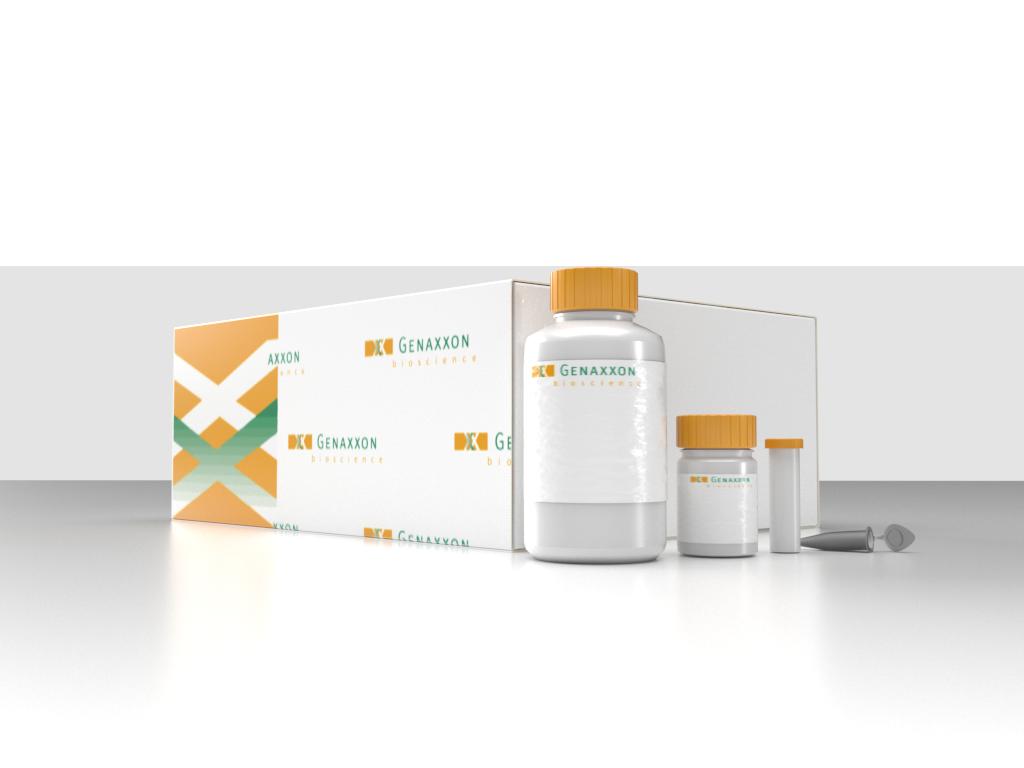 Blood DNA Purification Mini Prep Kit