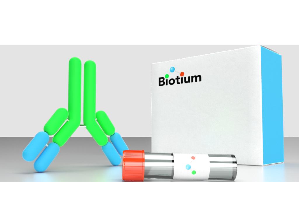 Anti-NCL Mouse Monoclonal Antibody (Biotin) [clone: Clone 364-5 NCL/902] SKU: BNCB1205