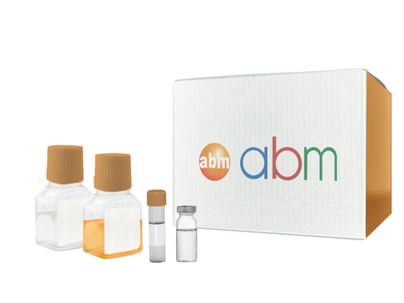 Applied Biological Materials Recombinant Human Leptin (LEP) package